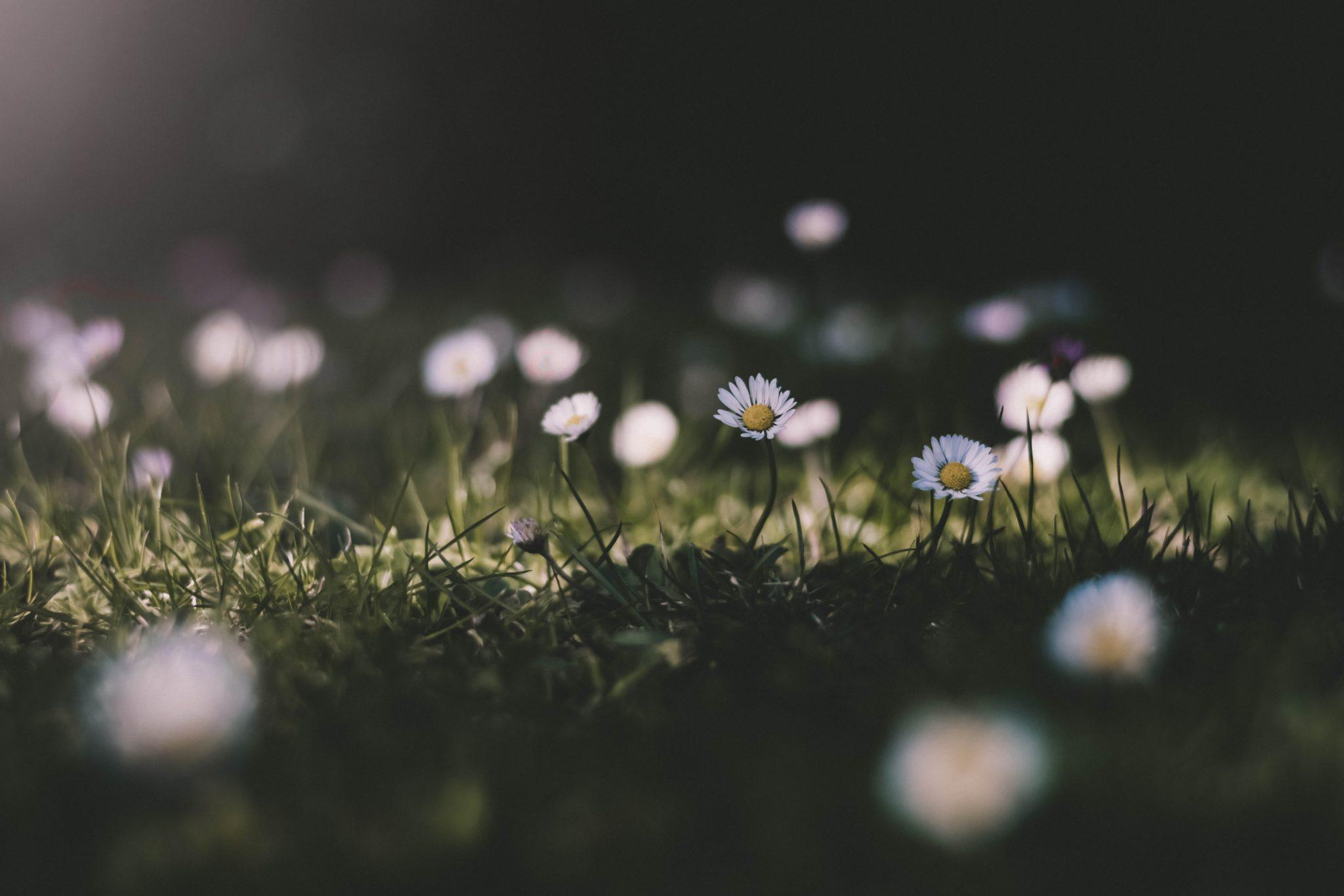 Pastorns ruta inför våren